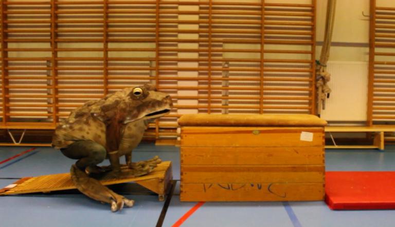 Paddan, av Ingela Ihrman. Konstvideo, 4.16 min. Årtal 2013